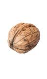 Крупный план одного грецкого ореха на белой предпосылке Стоковые Изображения