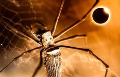 Крупный план паука на spiderweb и полном солнечном затмении накаляя o Стоковая Фотография RF