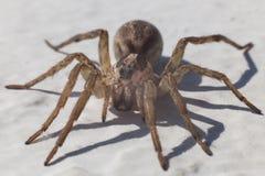 Крупный план паука Стоковая Фотография