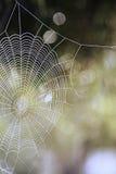 Крупный план паутины Стоковые Фото