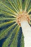 Крупный план пальмы Стоковые Изображения