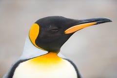 Крупный план пингвина короля, Южной Георгии, Антарктики Стоковые Фотографии RF
