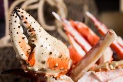 Крупный план пинцета омара Стоковые Изображения