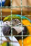 Крупный план попугая ары в клетке птицы Стоковая Фотография RF