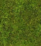 Крупный план предпосылки зеленого мха безшовной Стоковое Изображение