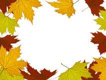 крупный план предпосылки осени красит красный цвет листьев плюща померанцовый Стоковые Фото