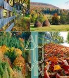 крупный план предпосылки осени красит красный цвет листьев плюща померанцовый Стоковые Фотографии RF