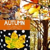 крупный план предпосылки осени красит красный цвет листьев плюща померанцовый Стоковое Изображение