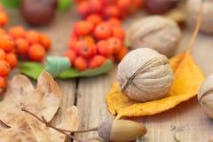крупный план предпосылки осени красит красный цвет листьев плюща померанцовый Стоковые Изображения RF