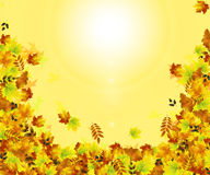 крупный план предпосылки осени красит красный цвет листьев плюща померанцовый Стоковое Фото