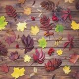 крупный план предпосылки осени красит красный цвет листьев плюща померанцовый Упаденная картина листьев Стоковое Изображение RF