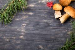 крупный план предпосылки осени красит красный цвет листьев плюща померанцовый Стоковое фото RF