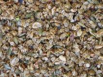 Крупный план предпосылки granola овса Стоковое фото RF