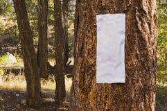 Крупный план пустого знака на дереве Стоковое Изображение RF