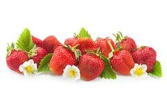 Крупный план плодоовощ клубники на белизне Стоковые Изображения