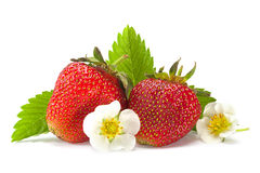 Крупный план плодоовощ клубники на белизне Стоковое фото RF