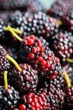 Крупный план плодоовощ шелковицы Стоковое Изображение