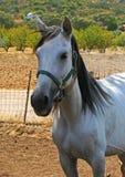 Крупный план драгоценной белой конематки Стоковое Фото
