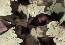 Крупный план различных листьев осени Стоковые Фотографии RF
