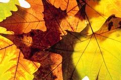 Крупный план различных листьев осени Стоковое Изображение RF