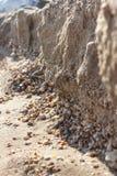 Крупный план раковин на пляже Стоковые Изображения RF