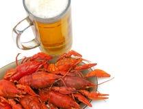 Крупный план раков и пива на белой предпосылке Стоковое фото RF