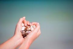 Крупный план рук держа разнообразие красивых seashells Стоковая Фотография