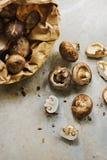 Крупный план свежего органического гриба cremini шиитаке Стоковое Изображение