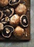 Крупный план свежего органического гриба portabello Стоковое фото RF