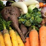 Крупный план свеже сжатых овощей Стоковые Изображения