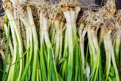 Крупный план свежих, органических, зеленых луков произвел без нитрата Стоковое Фото