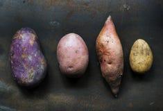 Крупный план свежих различных органических картошек Стоковое Изображение