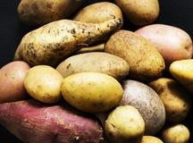 Крупный план свежих различных органических картошек Стоковые Изображения