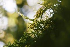 Крупный план свежих fronds папоротника на запачканной предпосылке Стоковое Изображение