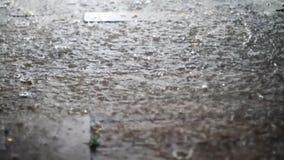 Крупный план сезона дождя лета видеоматериал