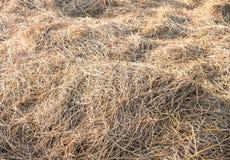Крупный план сена текстуры в цвете Стоковая Фотография RF
