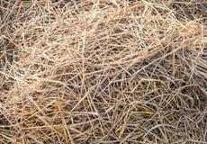 Крупный план сена текстуры в цвете Стоковая Фотография