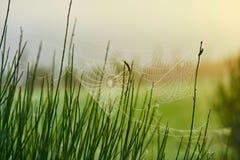 Крупный план сети паука на траве с падениями росы на ей Стоковая Фотография