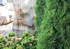 Крупный план сосны Стоковое Фото