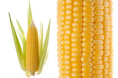 Крупный план стержня кукурузного початка Стоковое Фото
