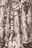 Крупный план текстуры баобаба стоковые изображения rf