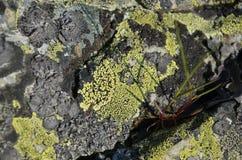 Крупный план текстуры коры дерева с мхом Стоковые Фото