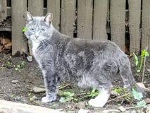 Крупный план темного серого и белого бляшечного кота Стоковая Фотография