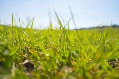 Крупный план травы луга Стоковая Фотография RF