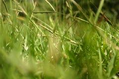 Крупный план лужайки Стоковые Фотографии RF