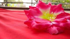 Крупный план цветки 2 искусства и ремесла красные и голубые искусственного хлопка Стоковые Фотографии RF