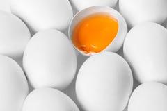 крупный план цыпленка eggs белизна Стоковое Изображение