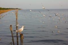 Крупный план чайки Стоковые Фотографии RF
