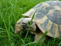 Крупный план черепахи Стоковые Фото