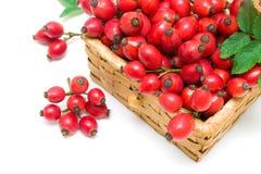 Крупный план ягод плода шиповника на белой предпосылке Стоковое фото RF